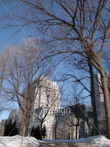 Arbre parc face immeubles ville montréal