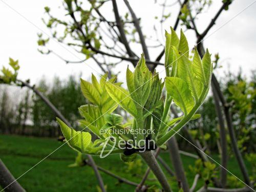 banque d 39 image bourgeons sur branche d 39 arbre vers le ciel nuageux exclusive stock design. Black Bedroom Furniture Sets. Home Design Ideas