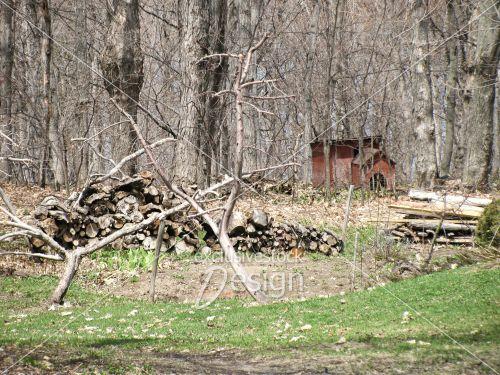 Buches bois forêt niche chien