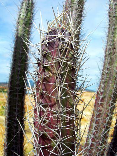 Cactus pousse long désert ciel bleu