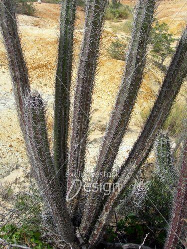 Cactus pousse long petits piques désert