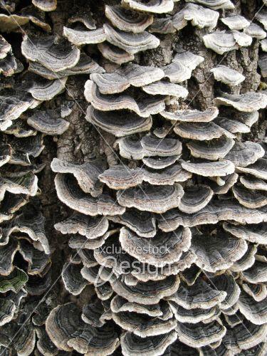 Banque d 39 image champignons p les sur tronc d 39 arbre exclusive stock design - Champignon sur tronc d arbre ...