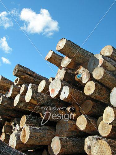 Coupe industrielle tronc arbres empilés ciel bleu
