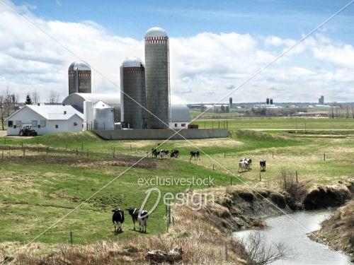 Ferme laitière silo grange vaches