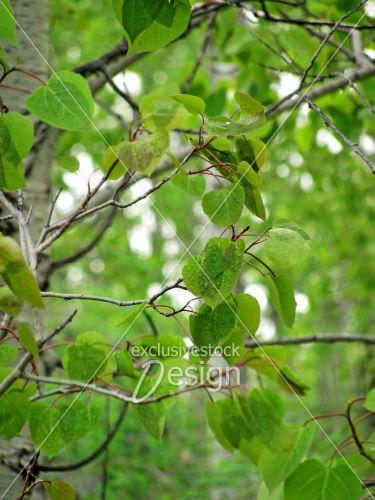 Feuilles arbre mouillées de pluie