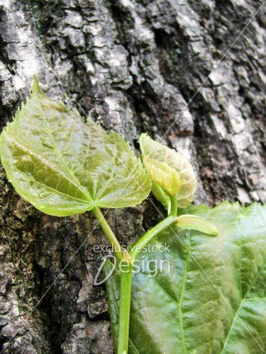 Feuilles bourgeons tronc arbre gros plan