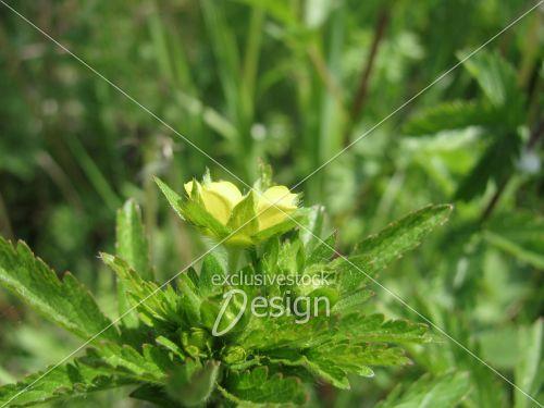 Fleur jaune poussant feuilles vertes