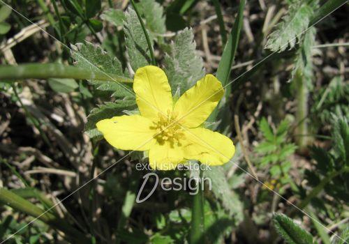Banque d 39 image fleur jaune sur sol remplis de plantes for Soldes plantes vertes