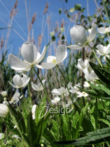 Fleurs blanches santé poussant ciel