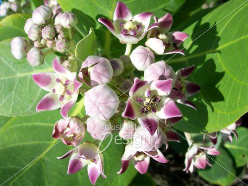 Fleurs bourgeons petite abeille sud