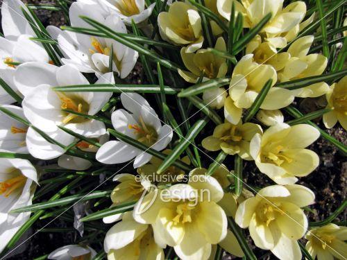 Fleurs jaunes blanches herbes vertes