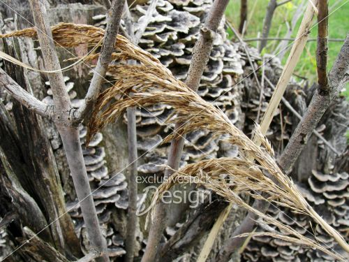 Herbe morte sec posée branches arbre