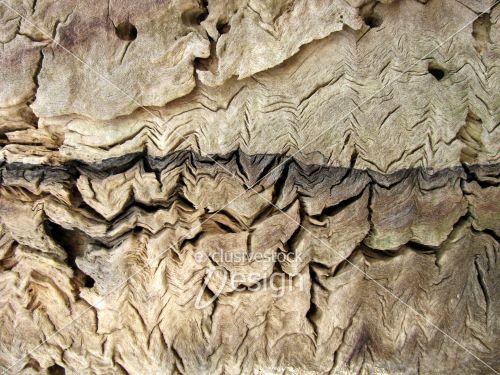 Intérieur tronc arbre fentes
