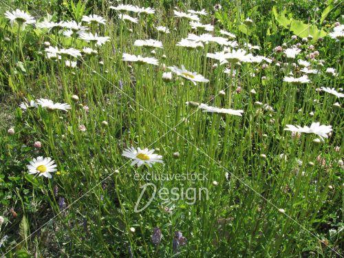 Banque d 39 image marguerites sur plantes vertes for Acheter des plantes vertes