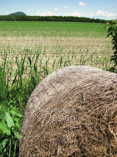 Motte foin champs labouré agriculture