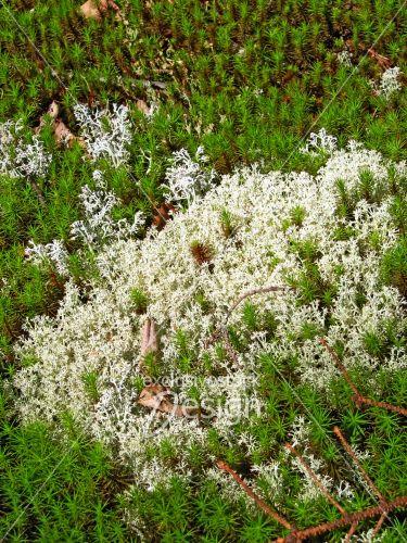 Mousse végétale verte blanche sol