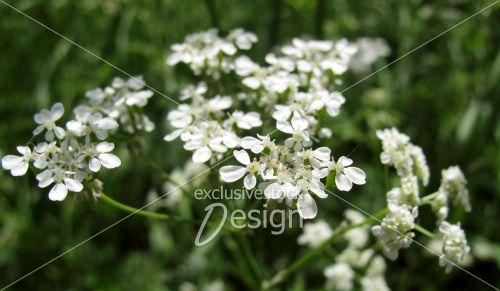Banque d 39 image petites fleurs blanches sur plantes vertes exclusive stock design for Petites plantes vertes