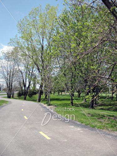 Piste cyclable près parc boisé vert