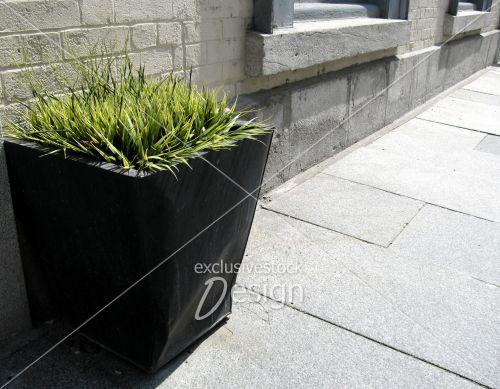 Banque d 39 image plante ext rieure nouveau genre sur for Plante verte exterieure