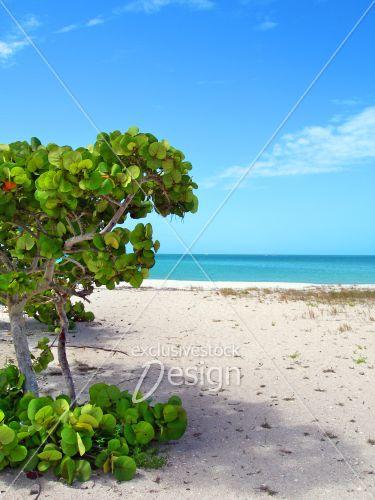Plante tropicale plage vue océan
