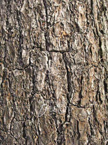 Texture écorce arbre gros traits