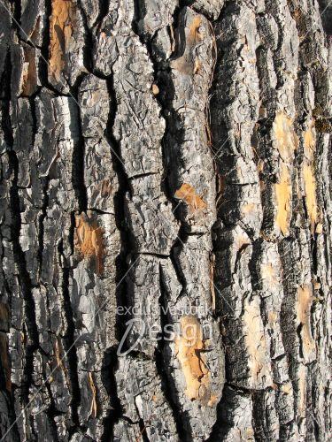 Texture écorce arbre grugé
