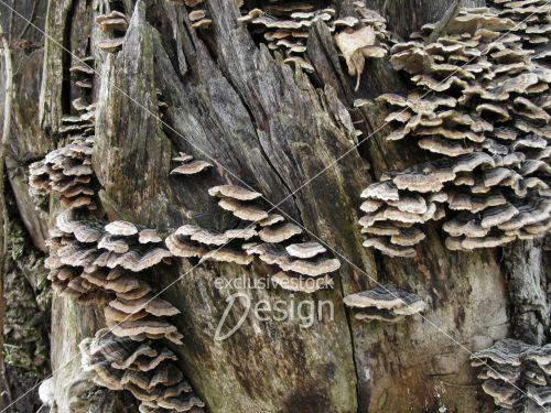 Banque d 39 image texture de tronc d 39 arbre vieilli avec champignons exclusive stock design - Champignon sur tronc d arbre ...