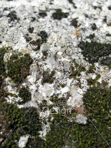 Texture verdure roche blanche