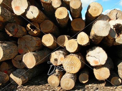 Troncons bois intérieur coupe