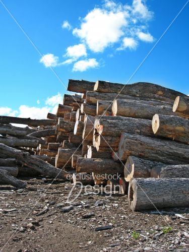 Troncs coupés coupe bois industrielle