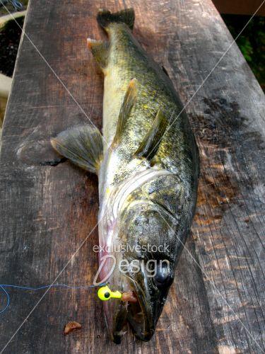 doré sur planche à poisson