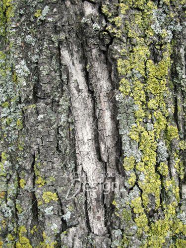 Écorce arbre partiellement recouvert mousse verte