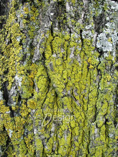 Écorce arbre recouvert mousse verte