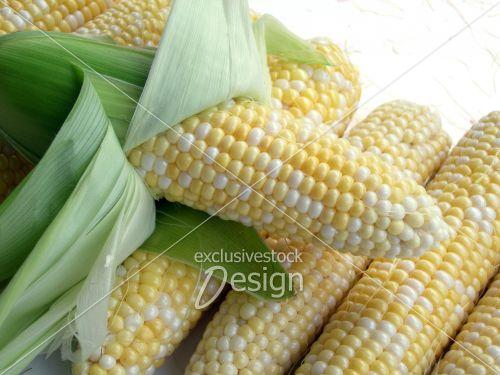 Épis maïs empilés pelés fond blanc